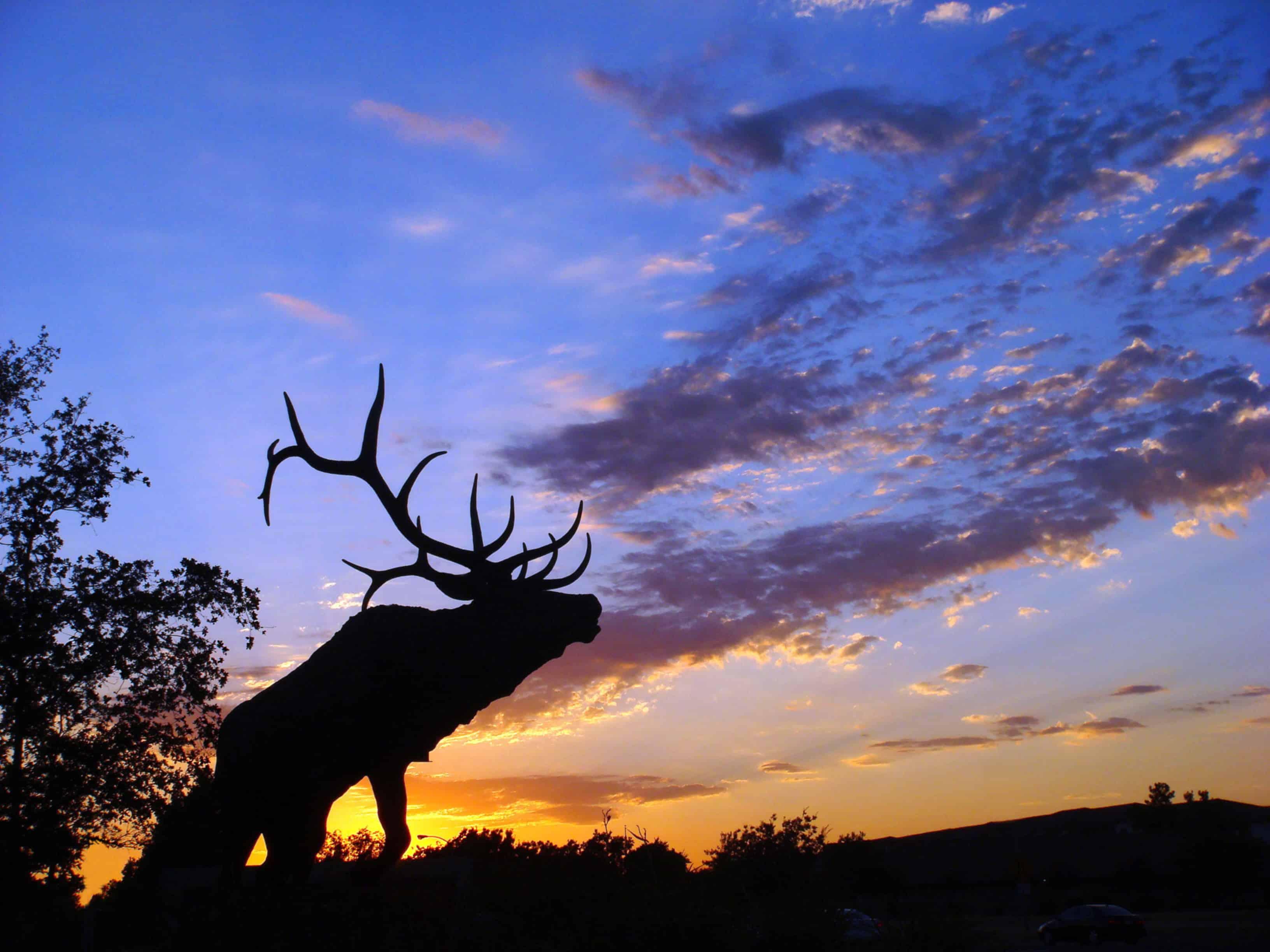 Elk Grove SEO Company